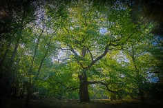 merkwaardige bomen